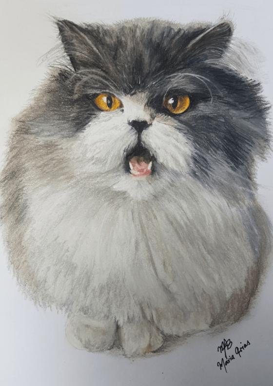 expositie katten