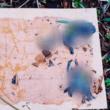 Vogels dood door plank met lijm en pindakaas