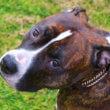 Rouwadvertentie en aangifte voor door OM gedode hond Milou