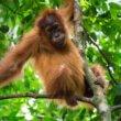 #GNvdD: Lush koopt tweede stuk land om Sumatraans regenwoud te beschermen
