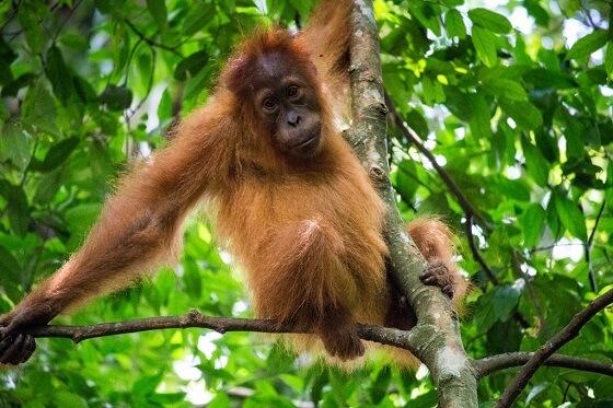 Sumatraans regenwoud