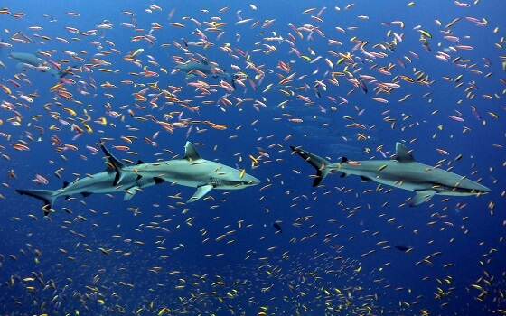 haaiensoort