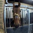 Stop het ellendige leven van veel manegepaarden (petitie)