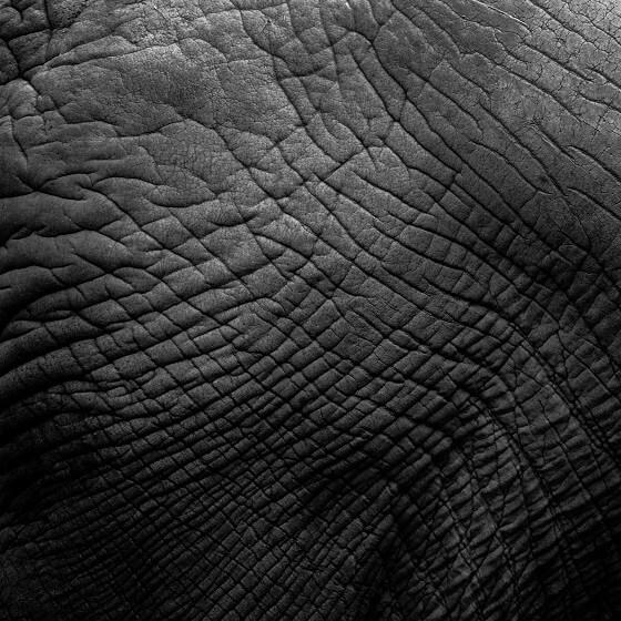 olifantenhuid