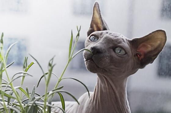 designer cats