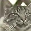 #GNvdD: Kat die door honkbalstadion rent start van dierenopvang