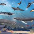 SOS Dolfijn op Walvisweken met het Reizende Walvisziekenhuis