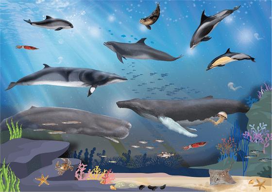 Walvisweken