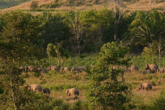 mens-olifantconflicten