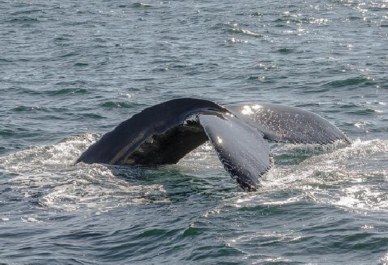 dolfijnen spelen