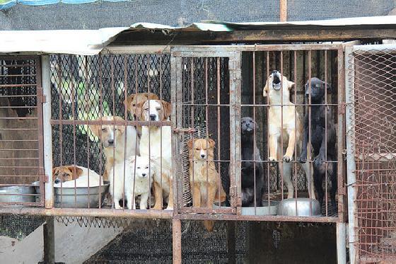 hondenvleesboerderij