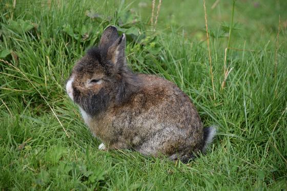 konijnenopvangcentra