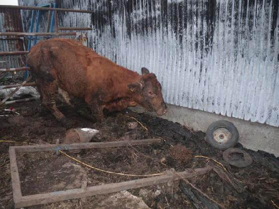 veroordeling boeren