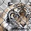 Ontsnapping dieren uit Eifel Zoo kost beer het leven