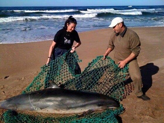 opvang zeedieren