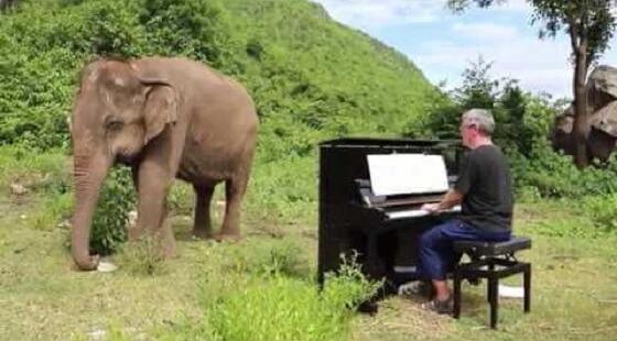 blinde olifant