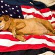 Meer honden in asiel na feestdag 4 juli Verenigde Staten