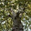 Klimaatverandering maakt groene tuin nóg belangrijker