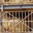 Hitteprotocol kippentransport genegeerd bij Wehl (video)