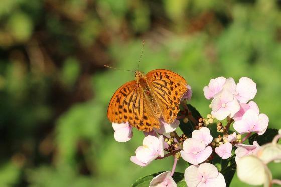 vlindervriendelijke tuinen