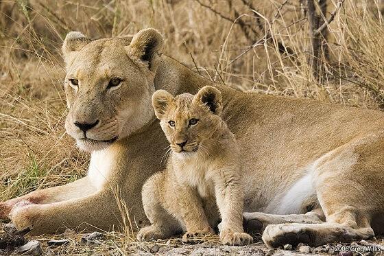 Wereld Leeuwen Dag