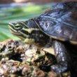 Grote schildpaddenkwekerij opgerold door Spaanse politie