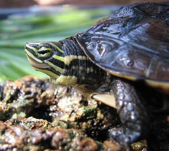 schildpaddenkwekerij