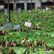 Tienduizenden mensen demonstreren tegen stierenvechten