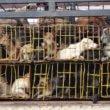 Verbod op verkoop hondenvlees in stadscentrum Hanoi