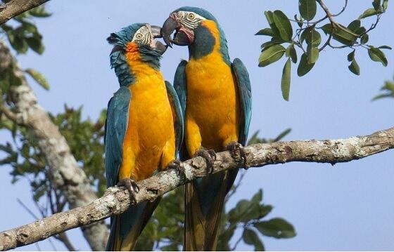 papegaaien - positieflijst voor huisdieren