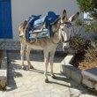 Leven voor ezels Griekse toeristenindustrie wordt lichter