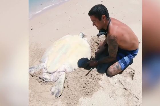 zeeschildpadStill Instagramvideo