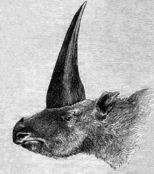 Siberische eenhoorn