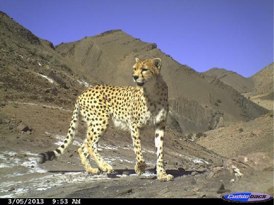 Iraanse natuurbeschermers