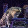 #GNvdD: Portugal verbiedt wilde dieren in circussen