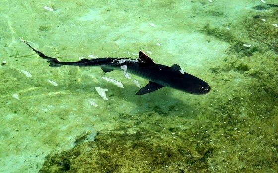 Haaien Actie Plan