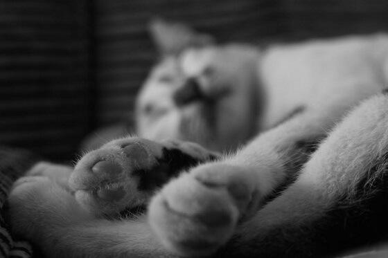 kattenmishandeling