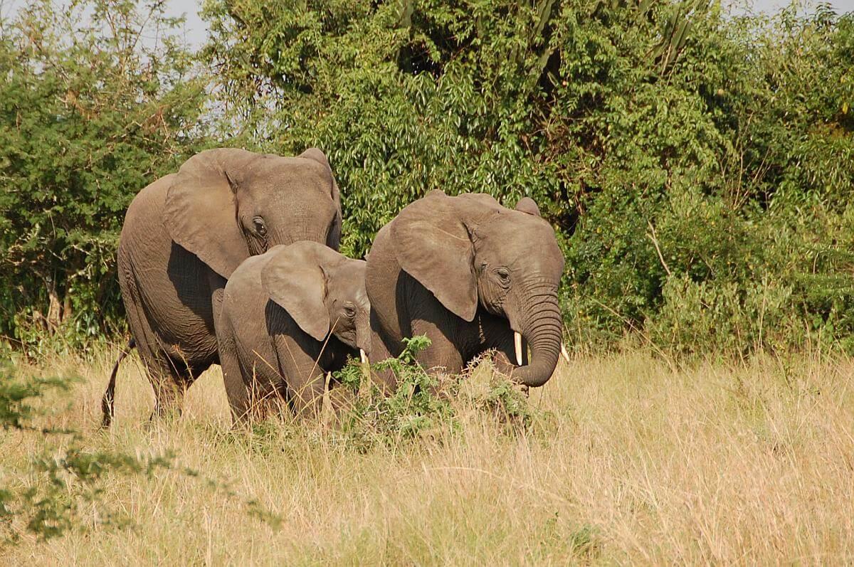 olifanten zimbabwe