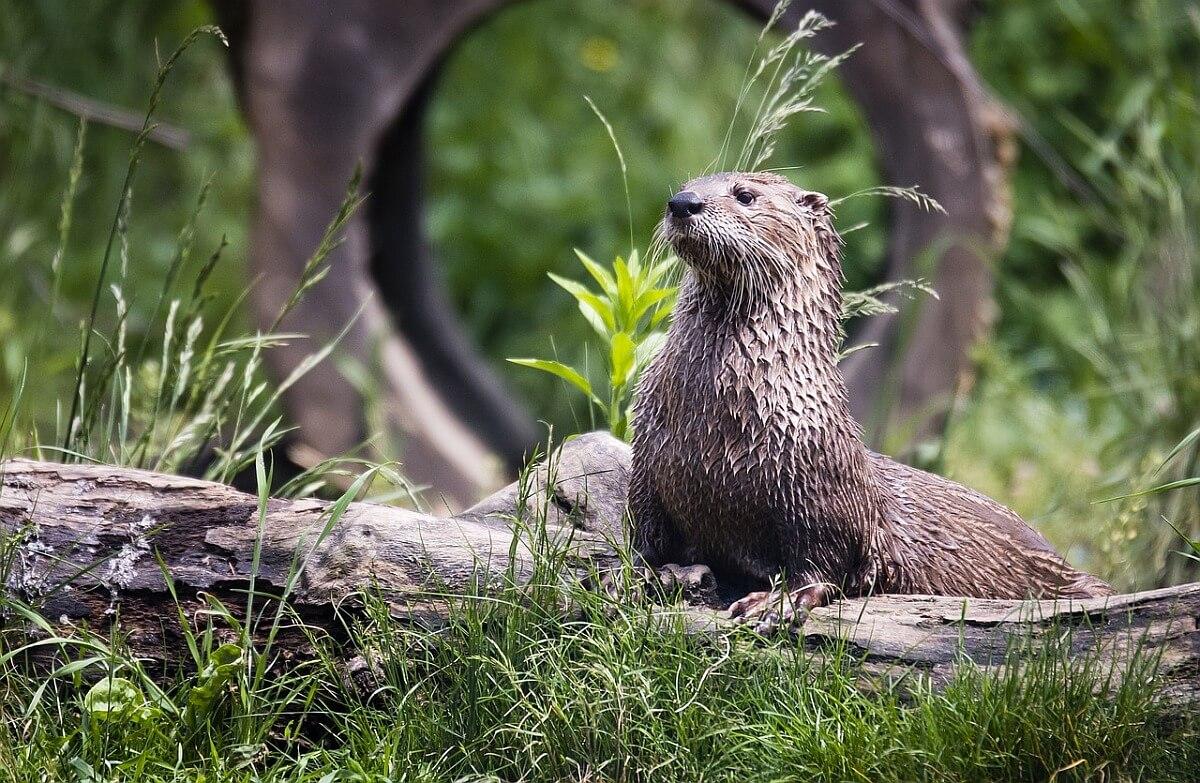 Otter - noodzaak van een positieflijst