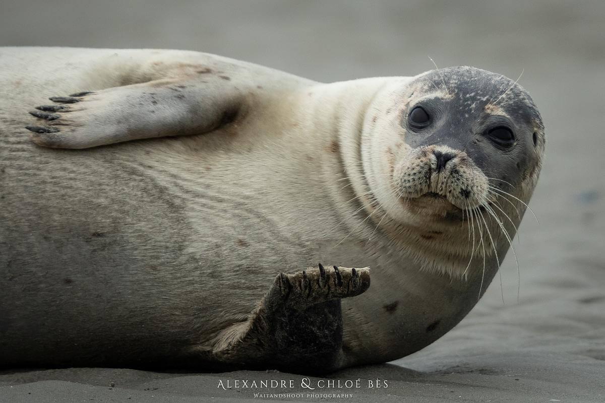 zeehondenakkoord