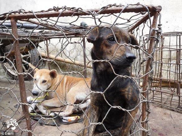 honden- en kattenvleesmarkt