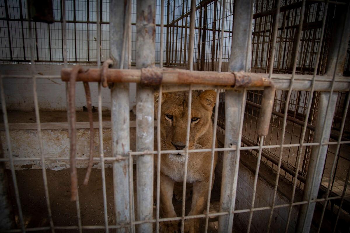 Rafah Zoo