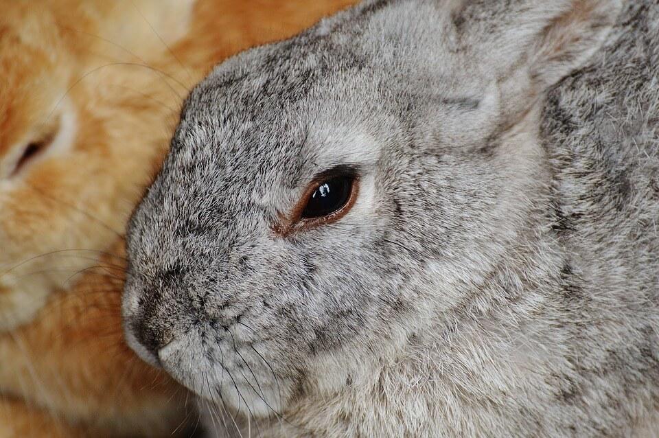 (paas)konijntjes