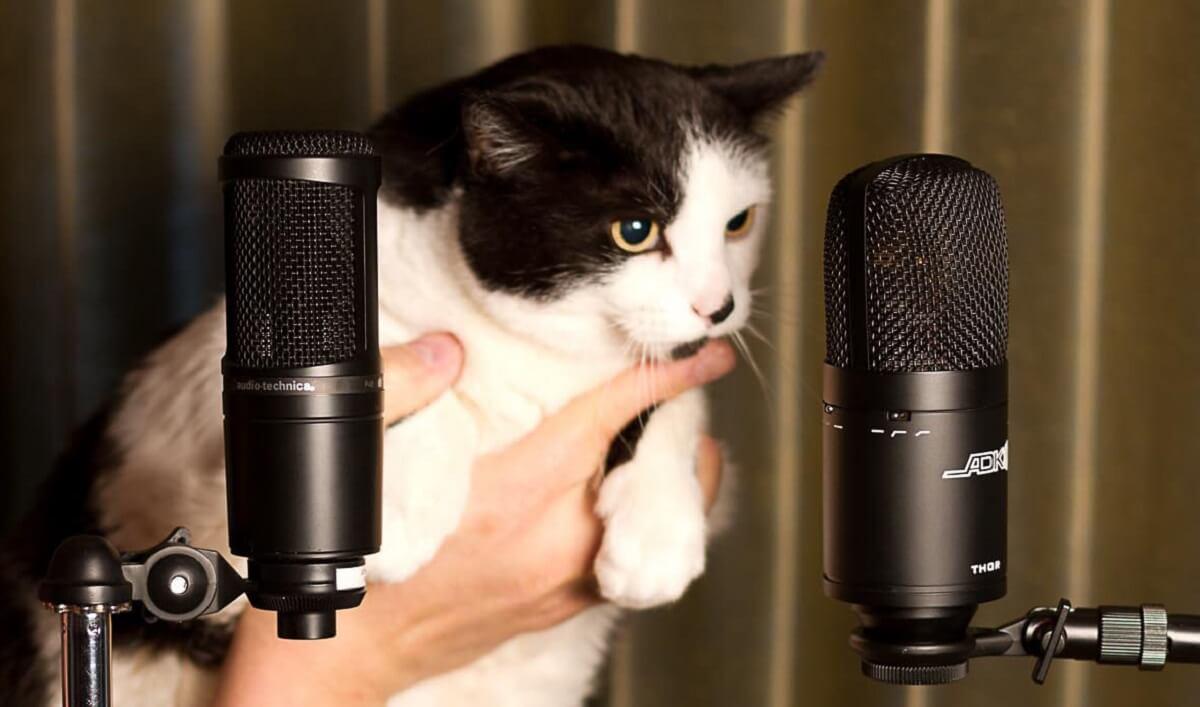 Meow Translator®