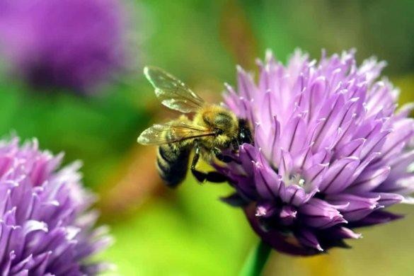 Bijen Bedrijfstuin