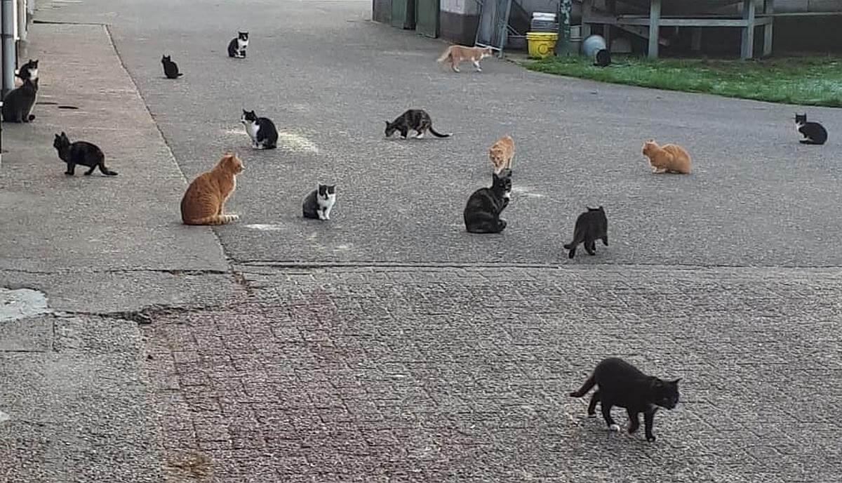 schuurkatten