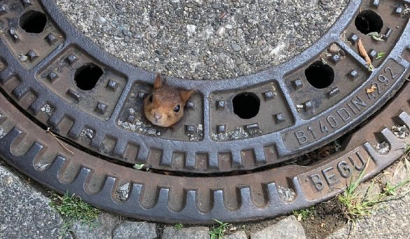 Duits eekhoorntje