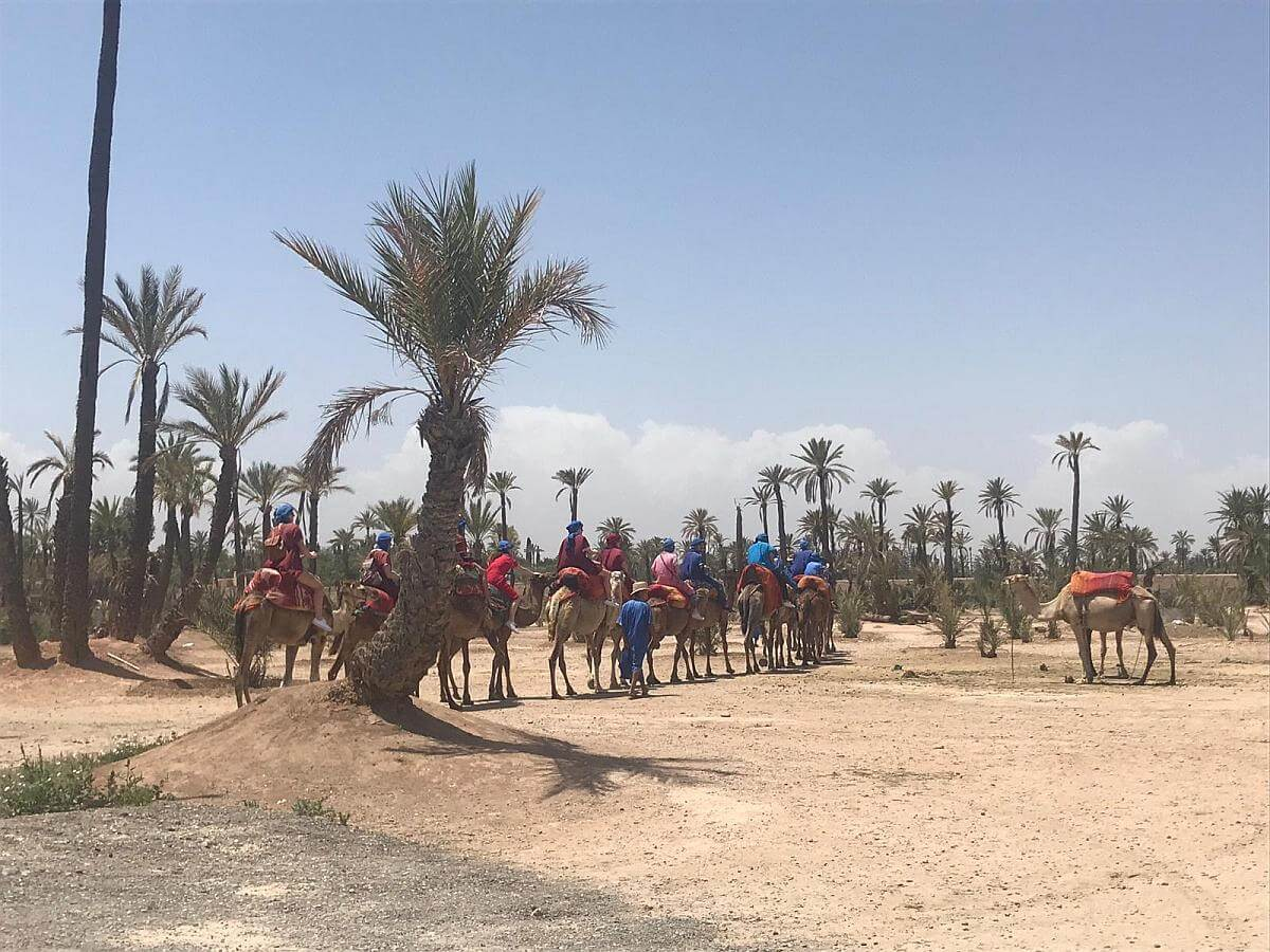 kameelritjes