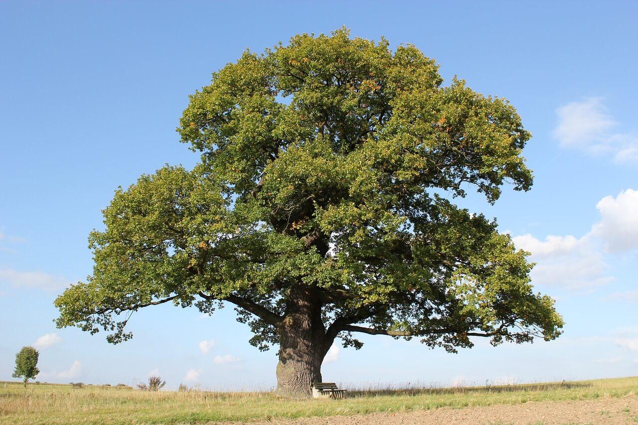 1.000.000.000.000 bomen