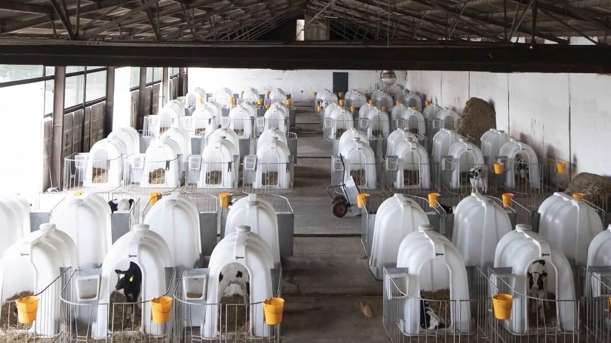 Europese vee-industrie